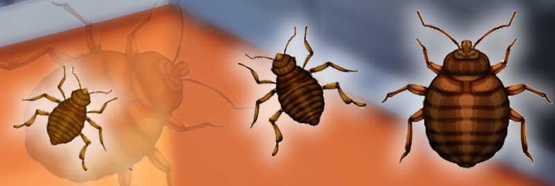 insekten archive sch dlingsbek mpfung dresden. Black Bedroom Furniture Sets. Home Design Ideas