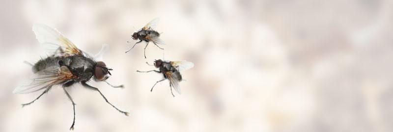k che kleine braune fliegen k che kleine braune fliegen kleine braune kleine braune fliegen. Black Bedroom Furniture Sets. Home Design Ideas